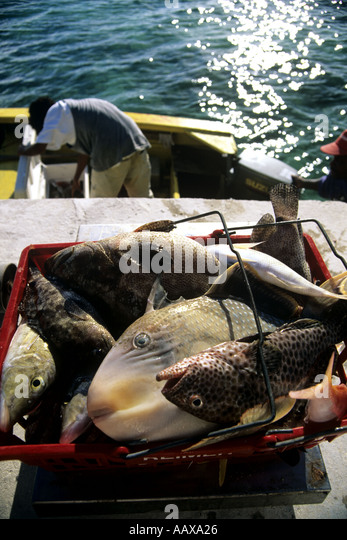 basket of reef fish in the pacific - Stock Image