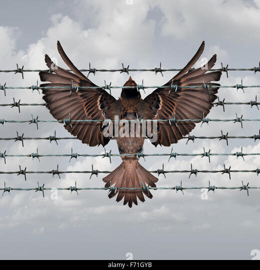Restricted freedom concept and constrained opportunity symbol as a bird caught and entangled in a barbed wire fence - Stock-Bilder