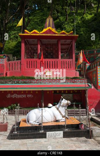 Hinduism, Nandi bull, Hindu Temple, Kirateshwar Mahadev Temple, Legship, West Sikkim, Himalayas, India, South Asia, - Stock Image