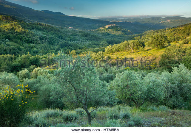 Seggiano, Province of Grosseto, Tuscany, Italy - Stock-Bilder