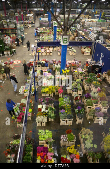 London, UK. 10th February 2014. 10/02/14    Florist, Nicky Doodson selects some red roses.    With only four days - Stock Image