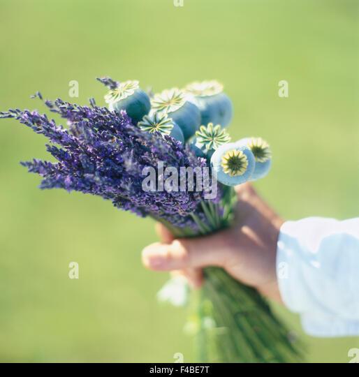 body part part of bouquet close-up color image detail flower human hand lavender part of plants simplicity square - Stock-Bilder
