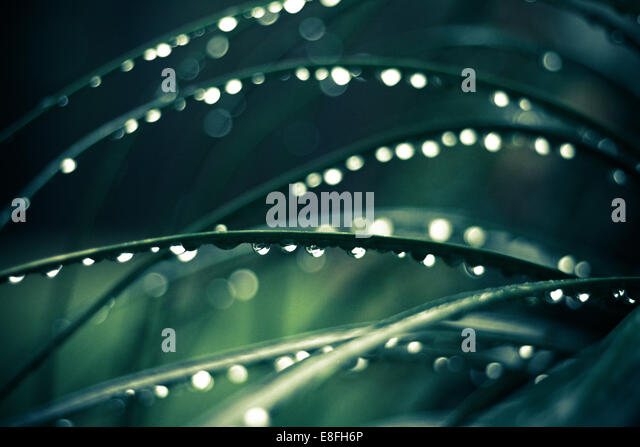 Morning dew on grass - Stock Image