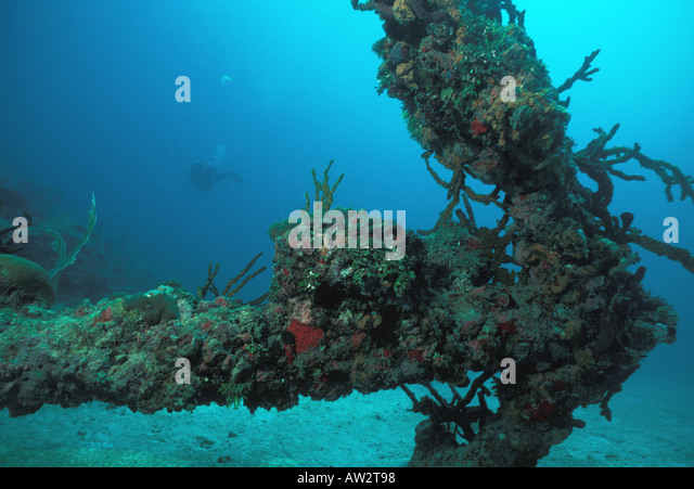 Underwater old anchor covered in sponges and coral diver hovering in background - Stock Image