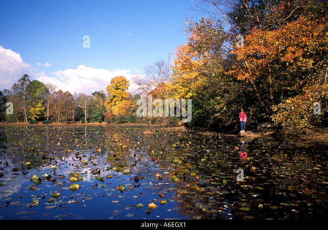 Fall Colors lake trees leaves - Stock Image
