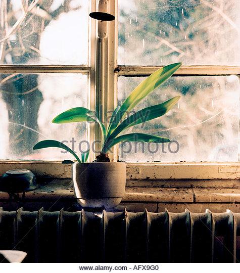 Topfpflanze stock photos topfpflanze stock images alamy for Sofa vor heizung