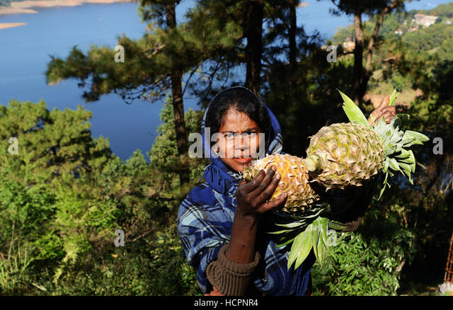 Fresh pineapples sold by Umiam Lake near Shillong, India. - Stock Image