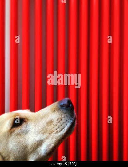 A dog waits obediently for a treat - Stock-Bilder