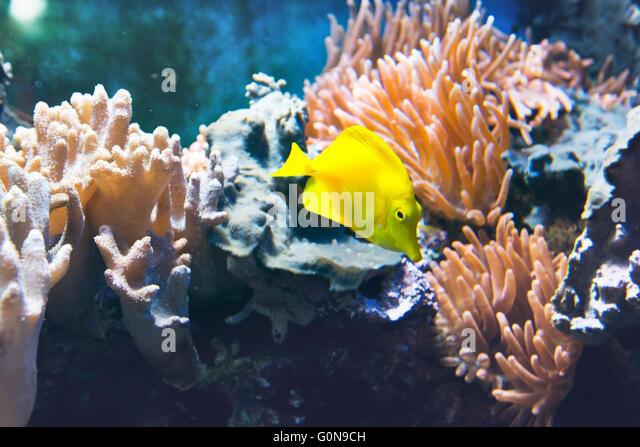 Beautiful Bright Tropical Fish Swimming Stock Photos