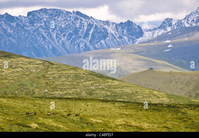 On the trail to Mtn. Belukha, Altai Republic, Siberia, Russia - Stock Image