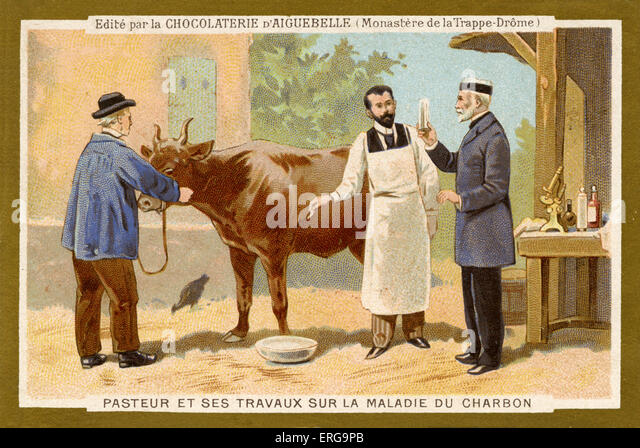Louis Pasteur working to find a cure for Anthrax. Louis Pasteur (December 27, 1822 – September 28, 1895), French - Stock Image
