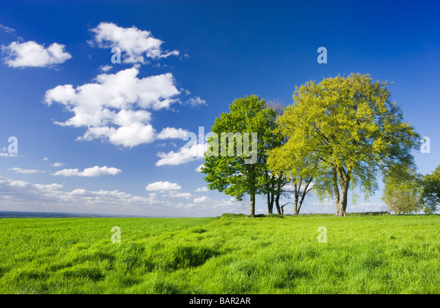 Trees in farm field. Surrey, UK. - Stock Image