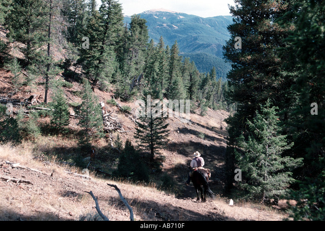 A wrangler guide in Shoshone National Forest east of Yellowstone National P ark Wyoming COPYRIGHT DUANE BURLESON - Stock Image