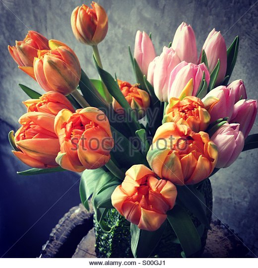 Colorful Tulips - Stock Image