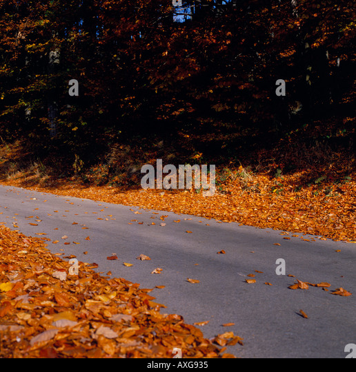 rural road with fall foliage. Photo by Willy Matheisl - Stock Image