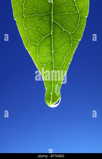 Waterdrop on new green leaf - Stock Image