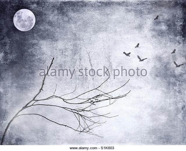 birds flying towards full moon' - Stock Image