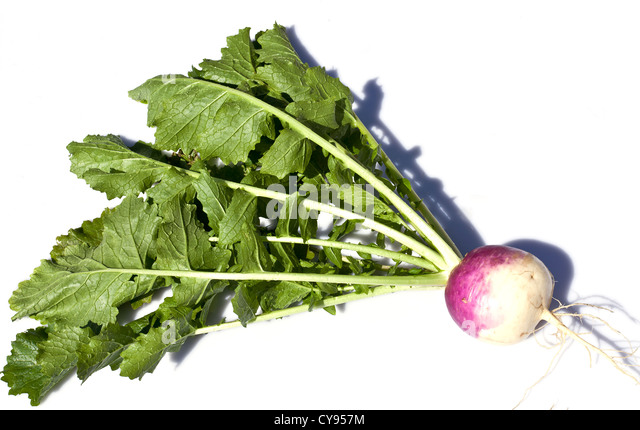 Turnip Purple Top Milan - Stock Image