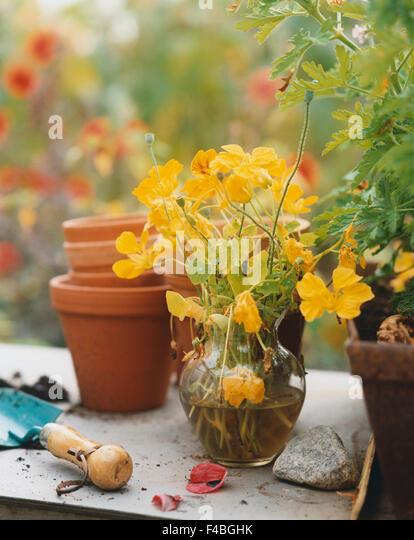 close-up color image flower pot garden gardening leaf planting plants spade vase vertical - Stock-Bilder