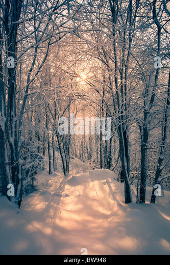 Scenic landscape with morning light at winter in forest - Stock Image
