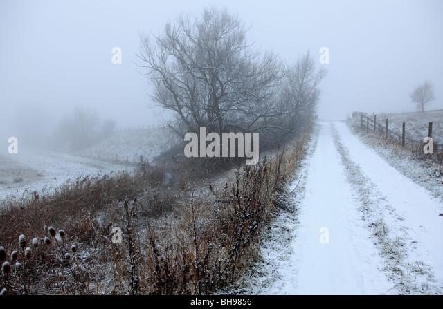 Winter Snowy Reeds Pattern Alnus glutinosa Fenland Landscape Cambridgeshire England - Stock Image