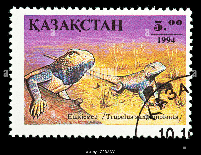 Postage stamp from Kazakhstan depicting a small lizard (Trapelus sanguinolenta) - Stock Image