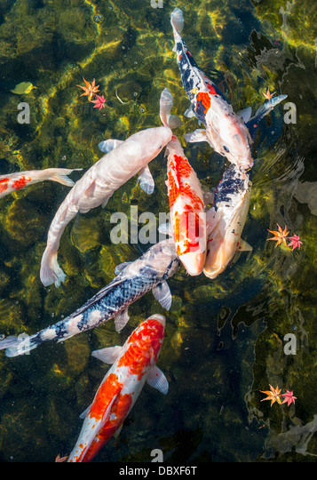 Koi pond in Nagoya, Japan. - Stock Image