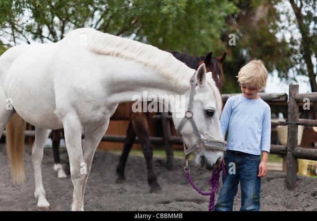 Boy walking white horse in yard - Stock Image