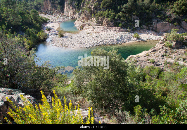 Brook, rivulet, crystal clear stream, mountain stream, Bach, kristallklarer Bach, Gebirgsbach, Korsika, Corse, France - Stock-Bilder