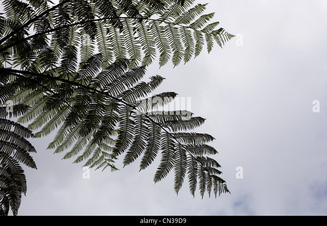 Low angle view ferns - Stock Image
