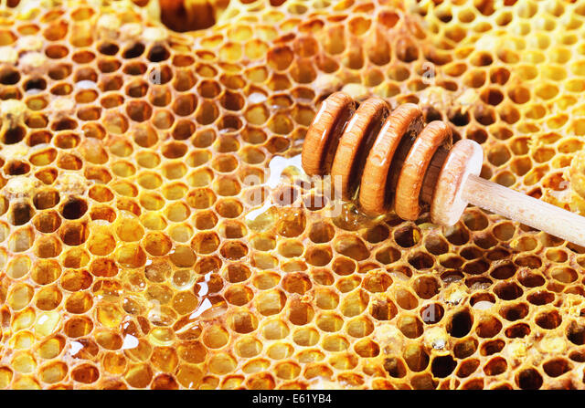 Honeycombs with honey and wooden honey dipper - Stock Image