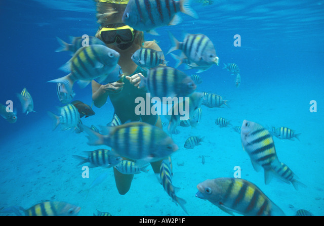 Bonaire Netherlands Antilles woman snorkeler feeding fish - Stock Image