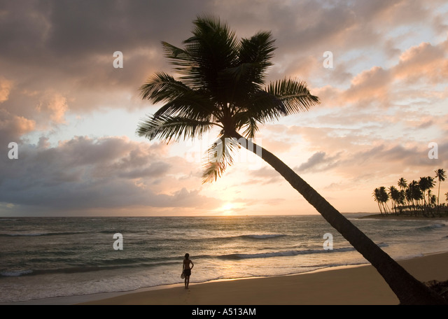 Sunrise over ocean behind palm tree at Uvero Alto near Playa Del Macao and Punta Cana in Dominican Republic - Stock Image