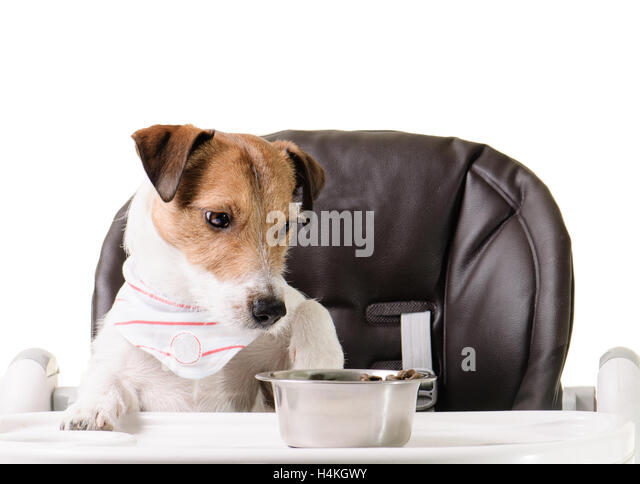 Kibble Stock Photos Kibble Stock Images Alamy