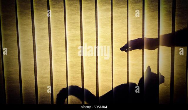 Cat shadow - Stock Image