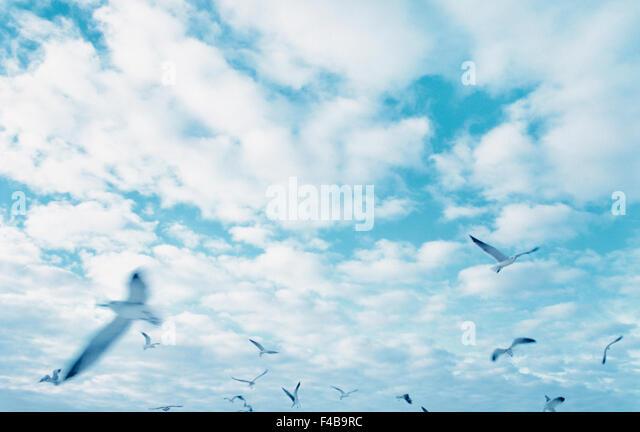 bird catalogue 2 cloud color image flying freedom horizontal midair movement nature seagull sky summer Swedish catalogue - Stock-Bilder