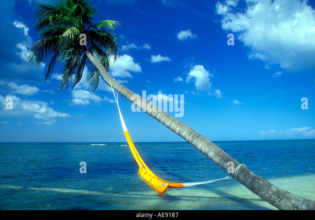 Hammock hanging from coconut palm tree in Puerto Rico Caribbean Property released image - Stock Image