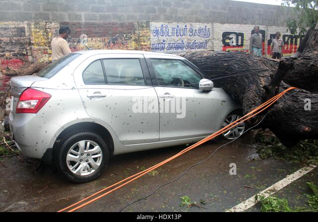 A car is seen under the tree that came in the path of Cyclone Vardah, lie uprooted in Chennai, India on December - Stock-Bilder