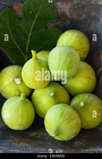freshly picked green figs in square blue rustic dish, with late afternoon garden sun - Stock Image