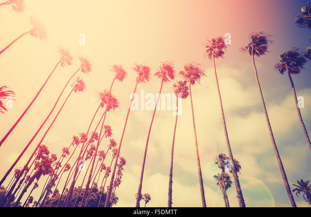 Retro stylized palms silhouettes at sunset with flare effect, Santa Monica, USA. - Stock Image