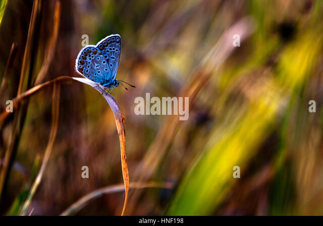Beautiful butterfly - Stock Image