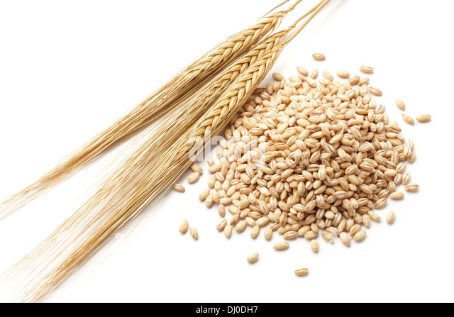 barley (hordeum) with pearl barley isolated on white - Stock Image