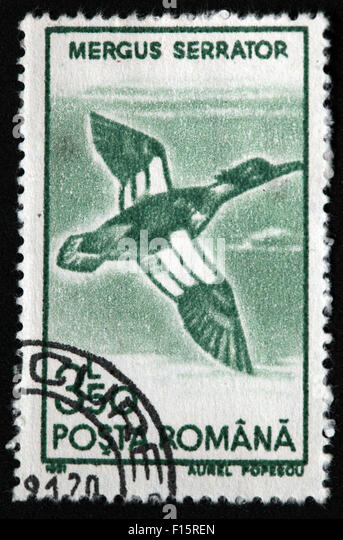 Posta Romana 3-50 Mergus Serrator bird stamp - Stock Image
