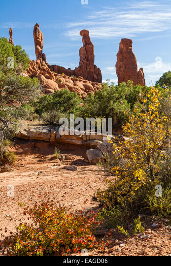Autumn color in a dry wash in the Klondike Bluffs area with the Marching Men in Arches National Park, Utah. - Stock Image