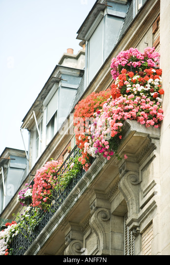 Flowers in window boxes, low angle view - Stock Image