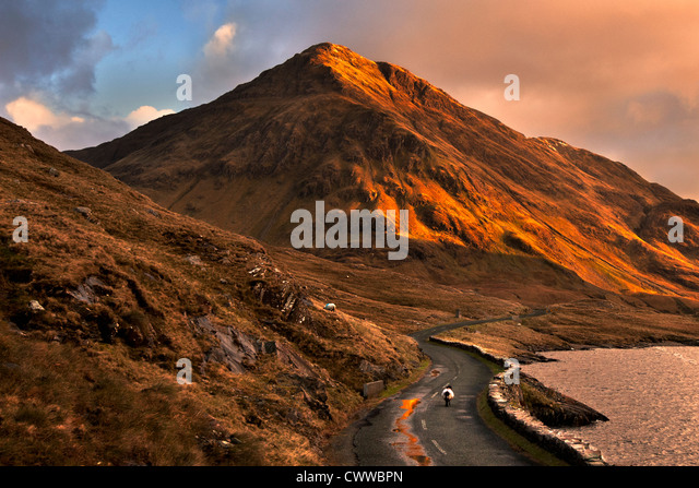 Sheep walking on rural mountain road - Stock Image