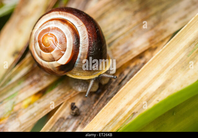 Spiral Shell Stock Photos Amp Spiral Shell Stock Images Alamy