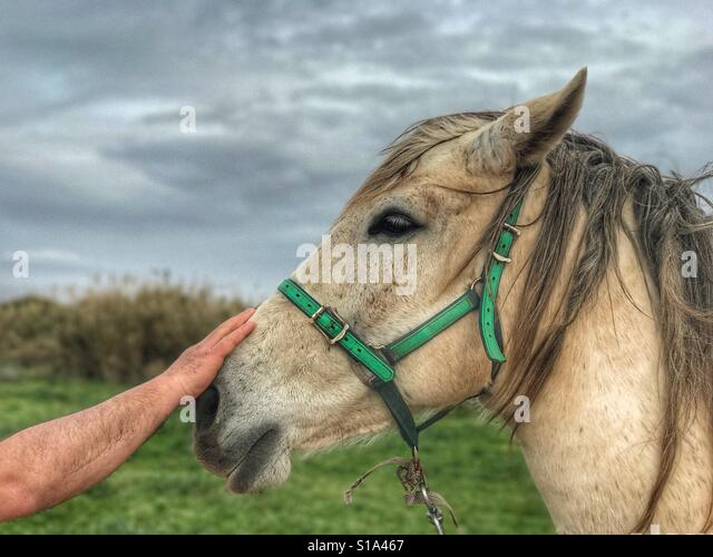 Man hand and horse - Stock-Bilder