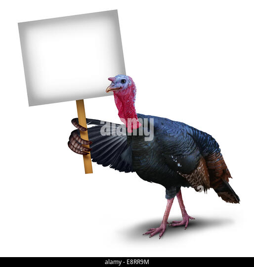 Turkey bird sign concept as a thanksgiving character symbol holding up with its wing a sign placard on a white background - Stock-Bilder