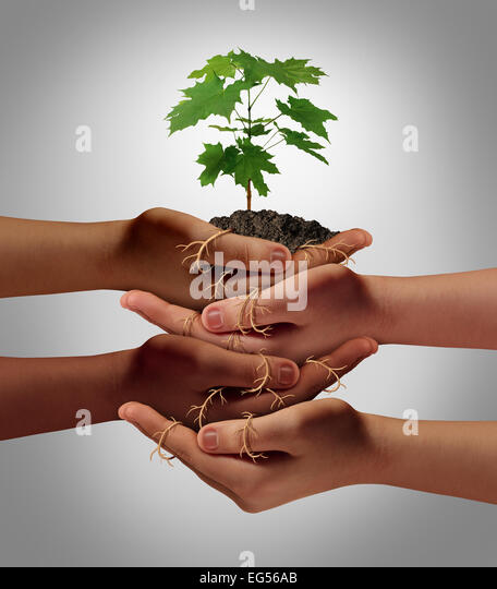 Community cooperation concept and social crowdfunding investment symbol as a group of diverse hands nurturing a - Stock-Bilder